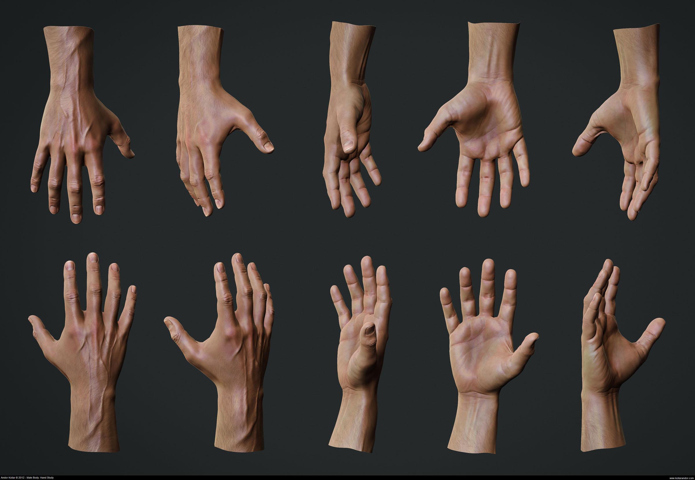 Anatomische Studie: Hand - 3D-Ring.de